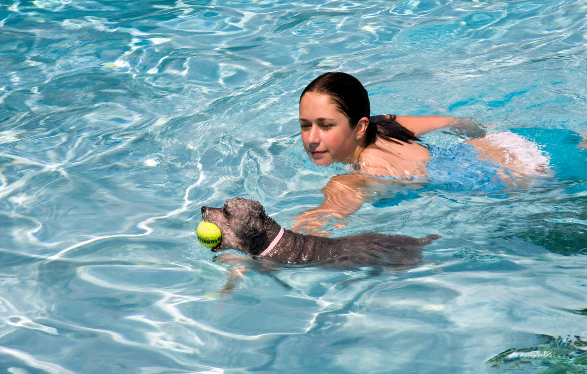 Pool & Pups: Guiding New Dog Owners