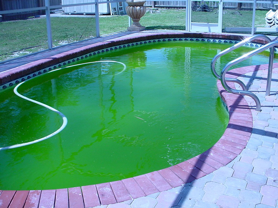 Tips on Pool Water Treatment