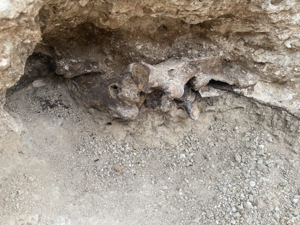 Fossils Found In Pool Excavation