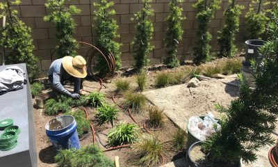 Drip Irrigation in Landscaping around the Pool Area - Grant Smith