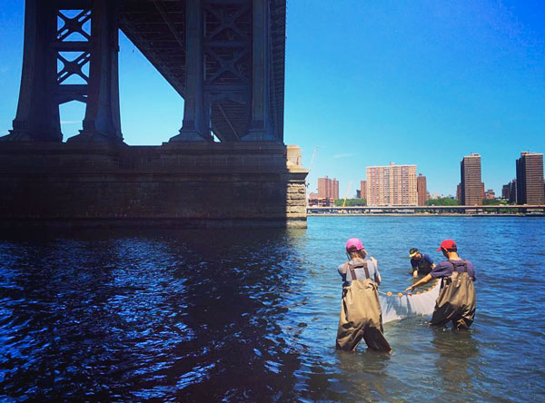 The Plus Pool team conducting water quality tests at Brooklyn Bridge Park.