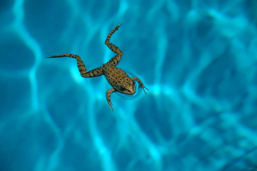 Keep frogs out of the swimming pool with these helpful hints