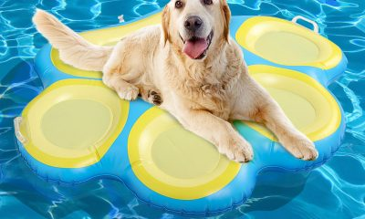 Pool dog videos -This Pool Has Gone To the Dogs