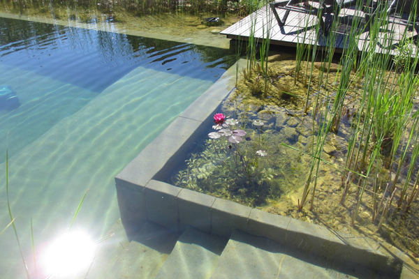 Natural Pools utilize a regeneration zone to biofiltrate water back into the pool.