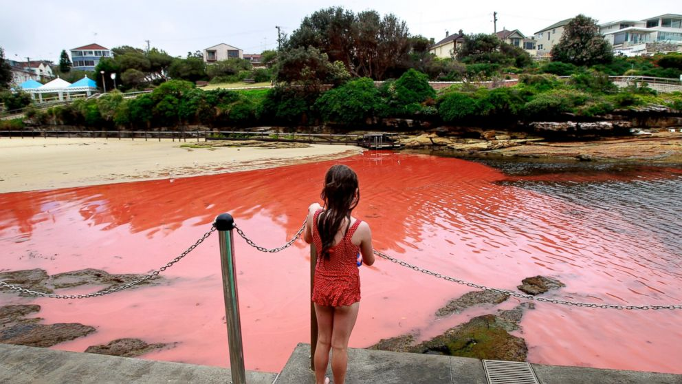 The Red Tide has devasted many parts of the Florida Coastline this season. - Photo Credit: Edwina Pickles/The Sydney Morning Herald/Fairfax Media/Getty Images